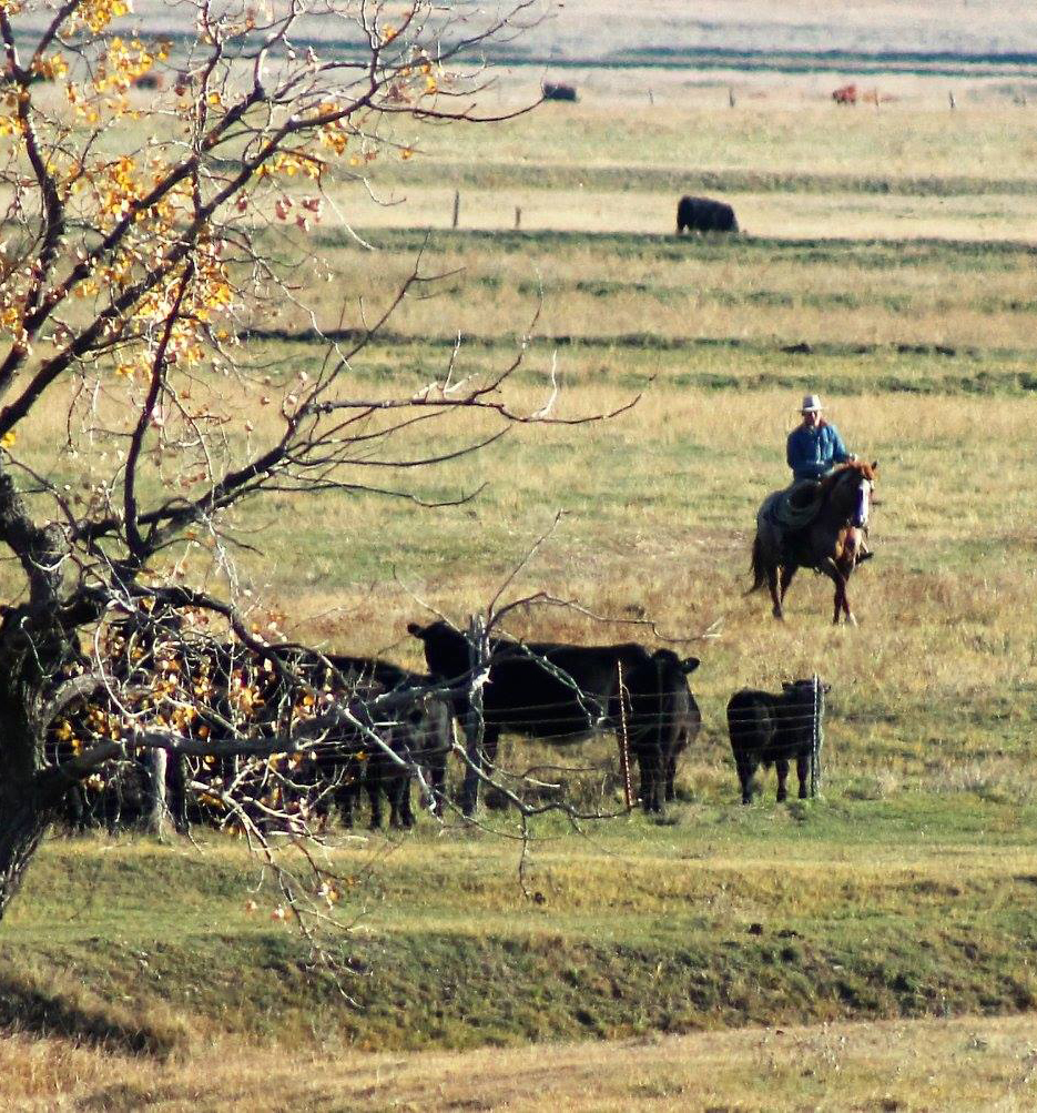 Long Pines Performance Horses and Irish Black Cattle