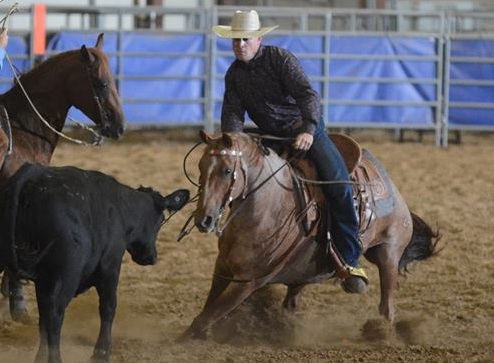 Peptospoonful Cash | Long Pines AQHA Mare
