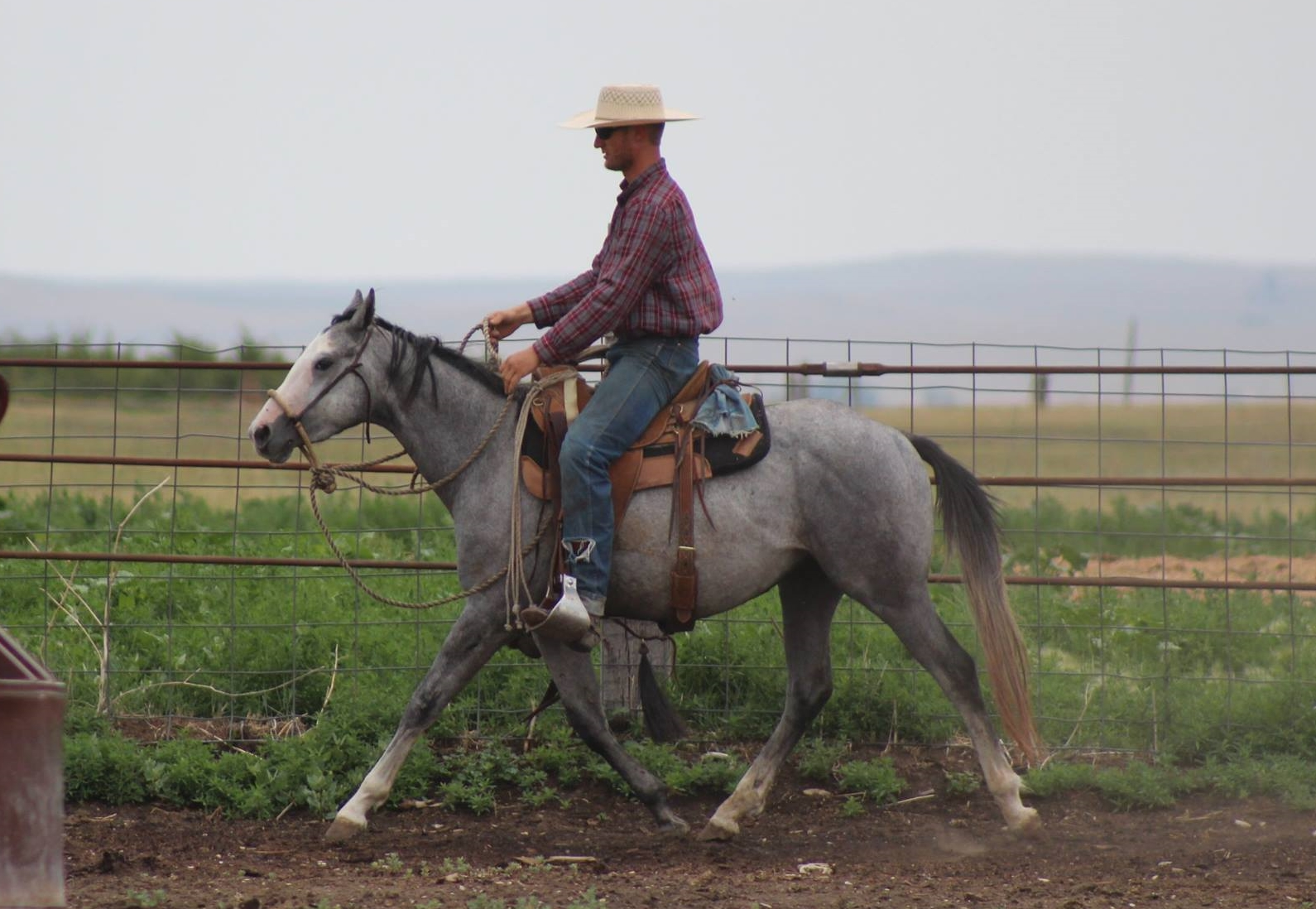 Dont Bug the Judge | Long Pines AQHA Gelding