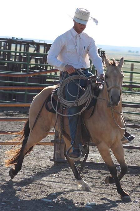 FINISHED AQHA Horse