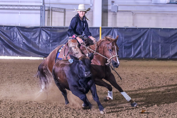 FINISHED AQHA Horse | Smooth Talkin Remedy
