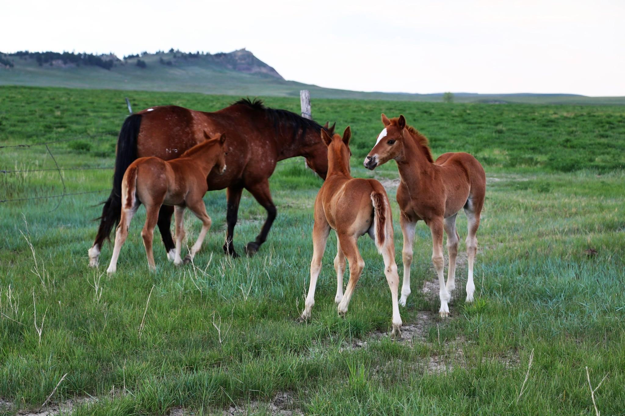 Bettin Yer Smart 2017 Foals