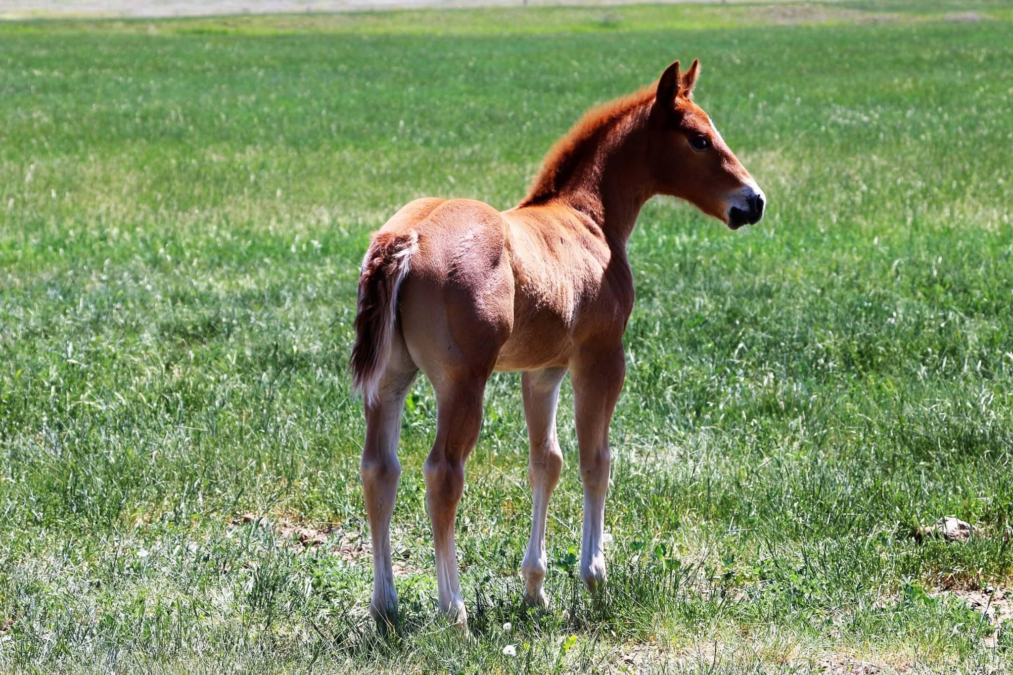 Bettin Yer Smart 2017 Foal