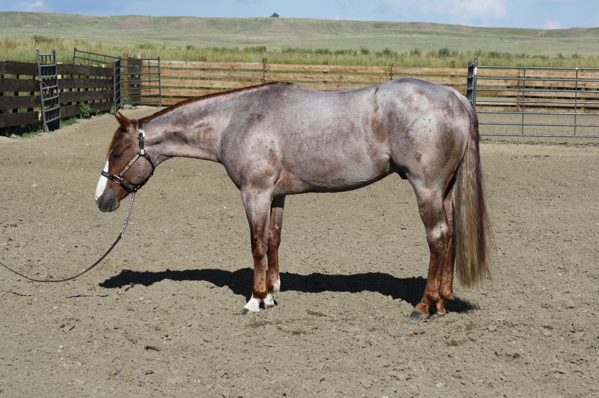 Bettin Yer Smart | AQHA Stallion