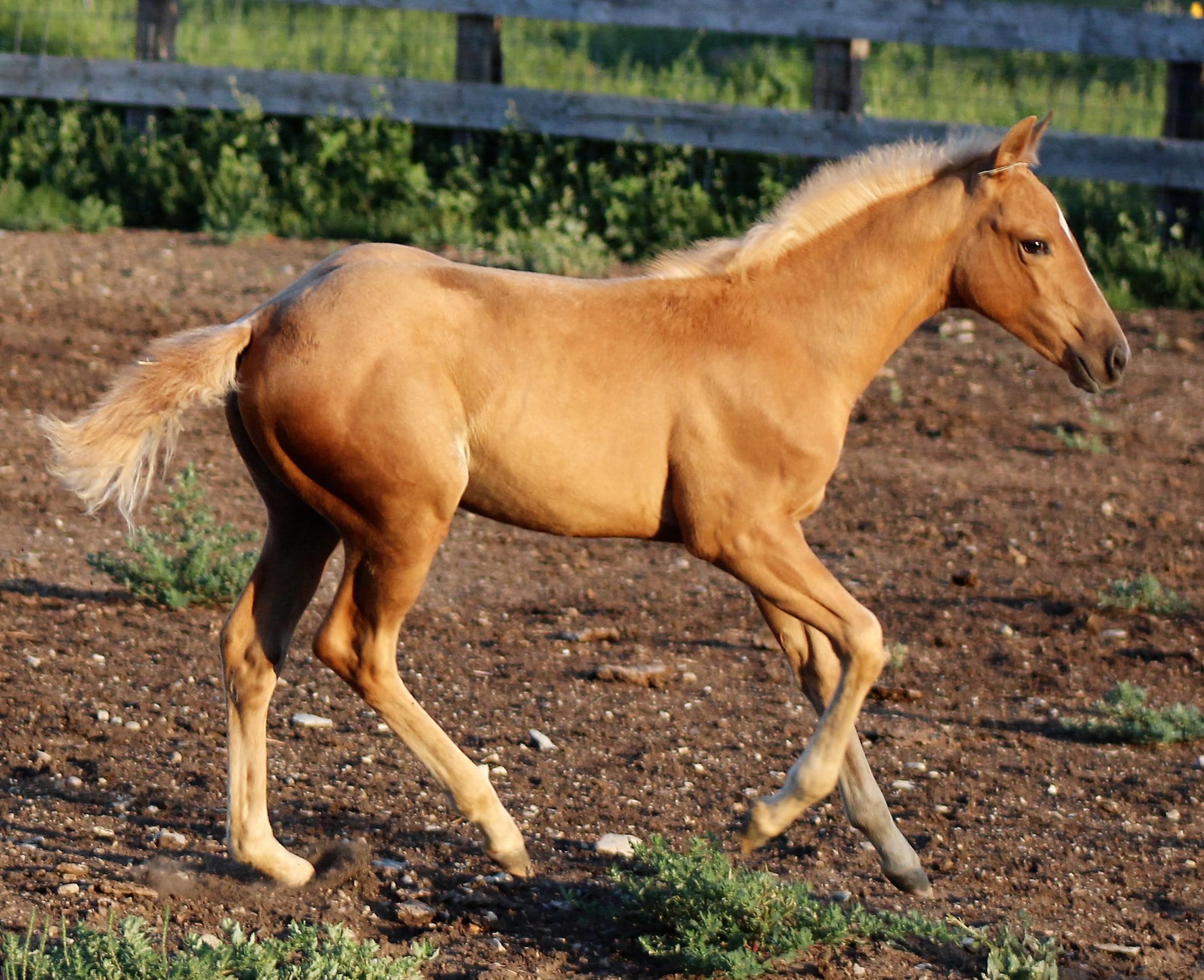 Bettin Yer Smart AQHA Stallion