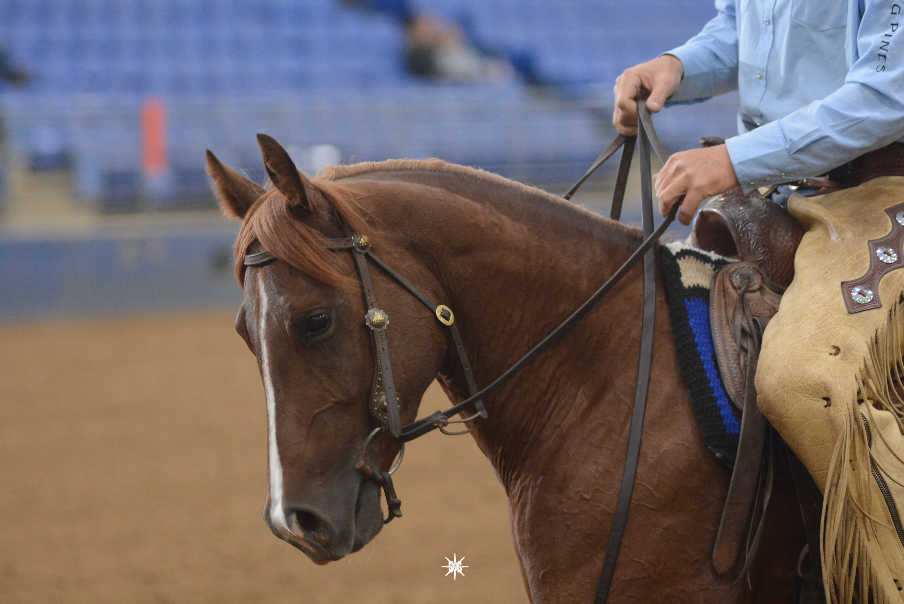 Smooth Talkin Remedy AQHA Prospect
