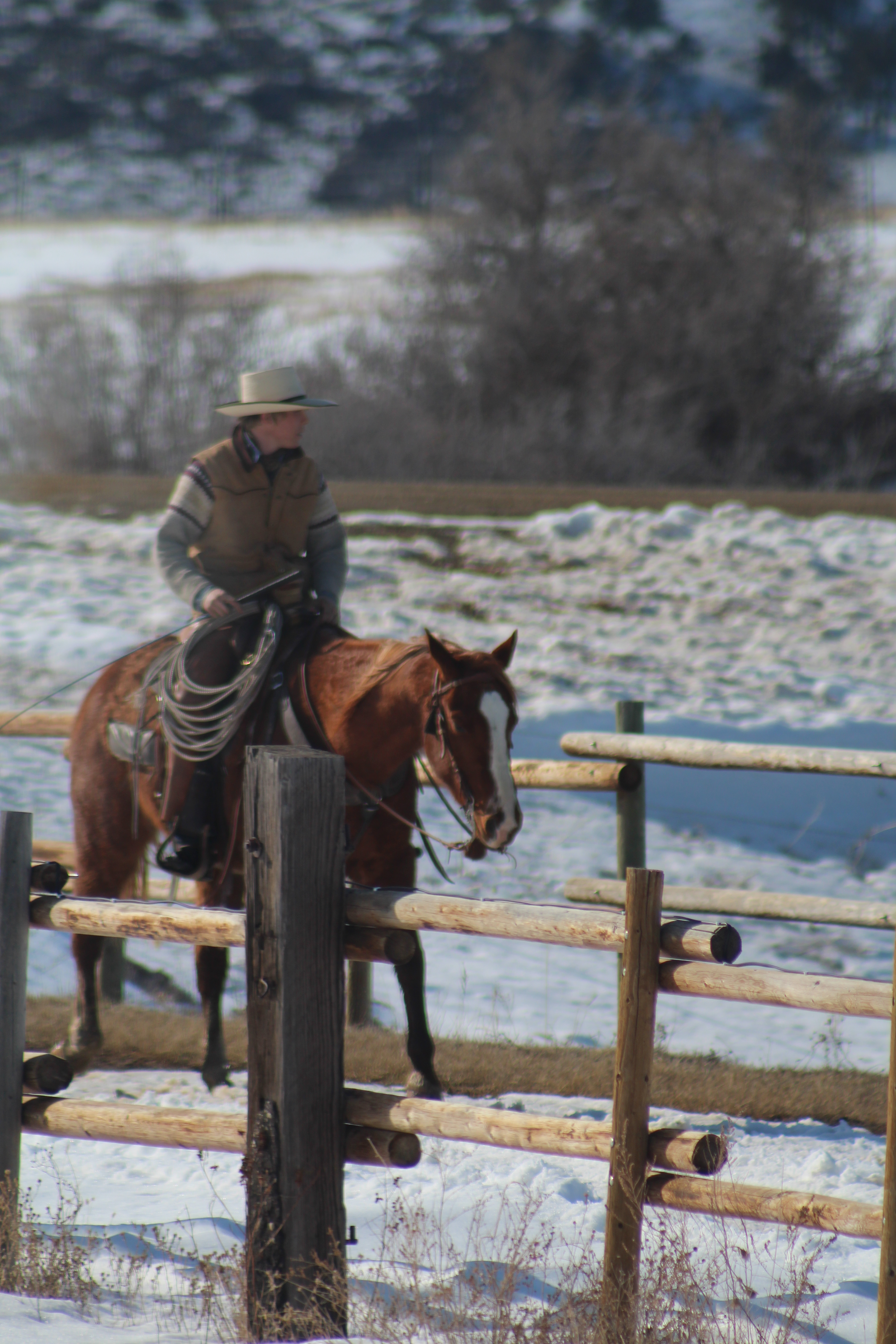 Frosty AQHA Finished Ranch Horse