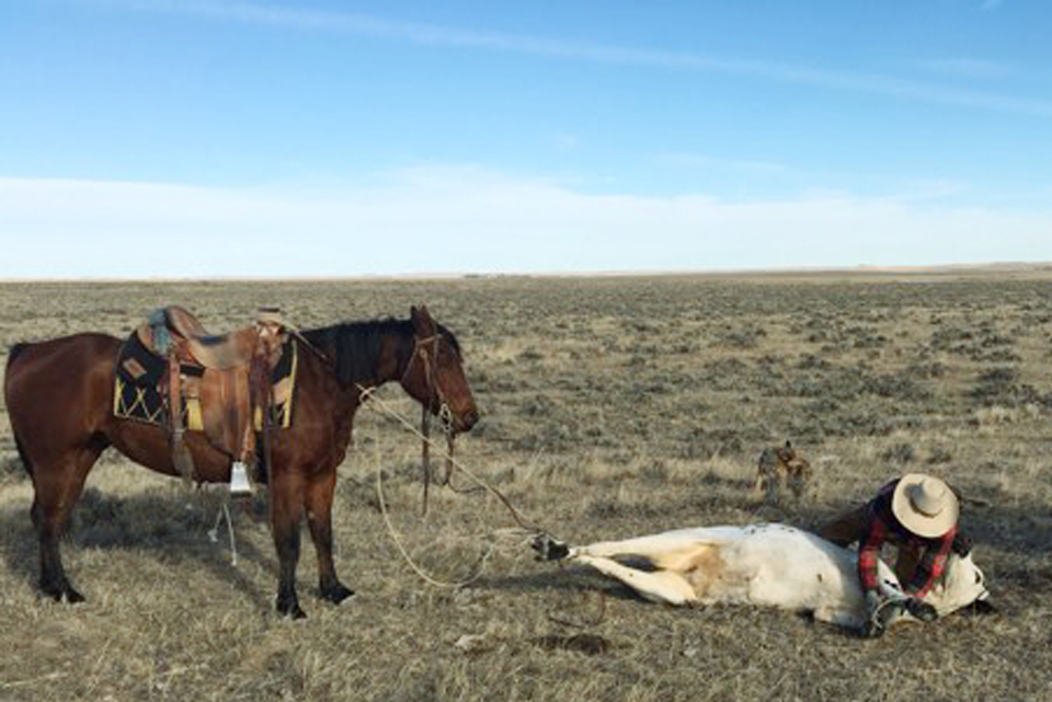 Frexseptional | Long Pines AQHA Mare