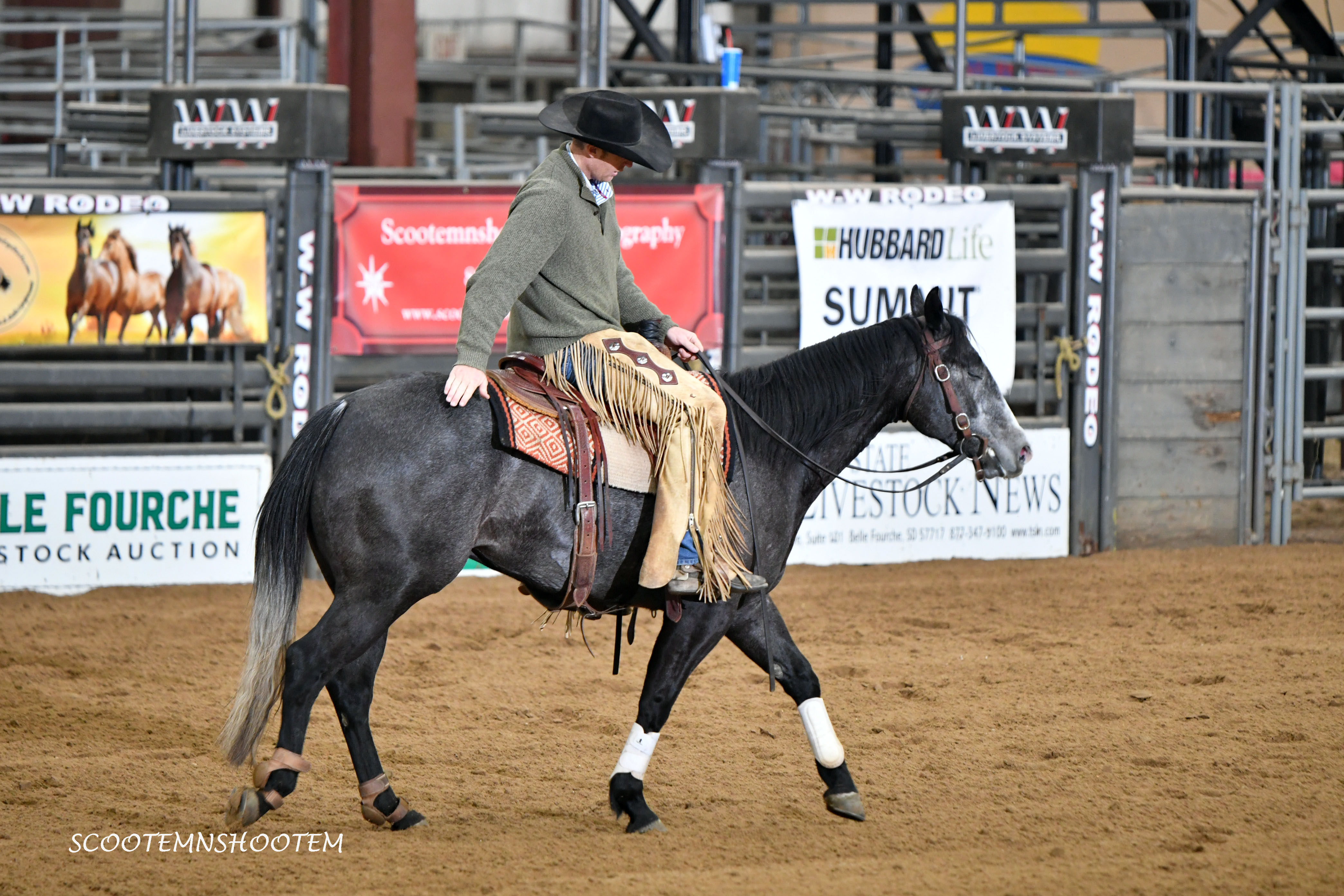 "Judges Chambers ""Spider"" 2014 AQHA Gray Gelding"