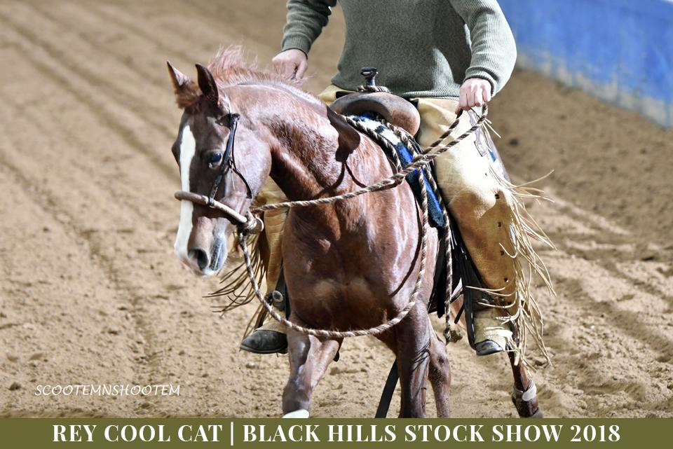 Rey Cool Cat | 2013 AQHA Chestnut Gelding