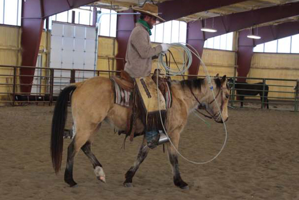 FINISHED AQHA Horse | Tuff Vaca Rey