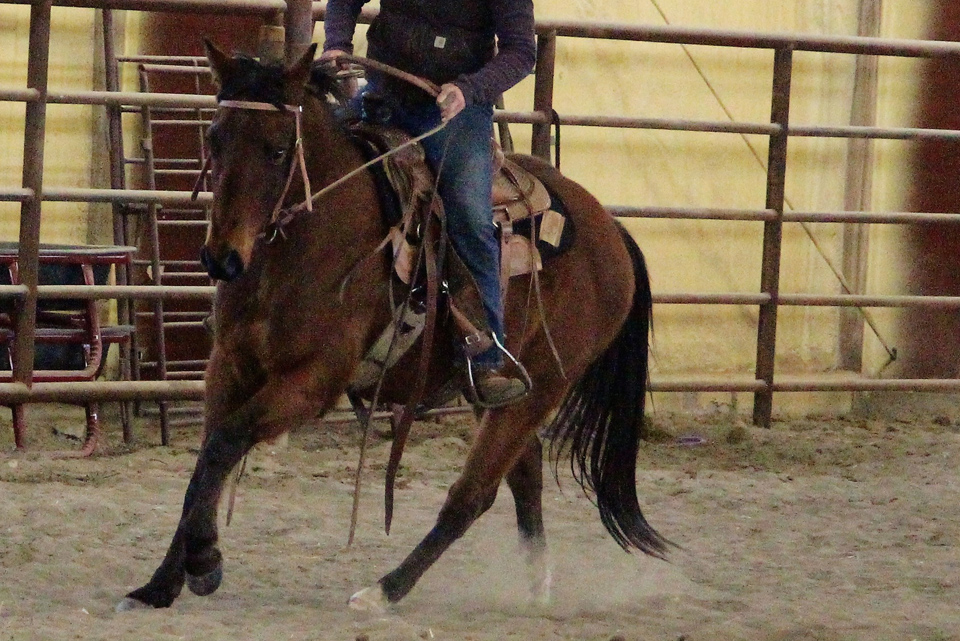 Shiney and Tuff | Long Pines AQHA Prospect