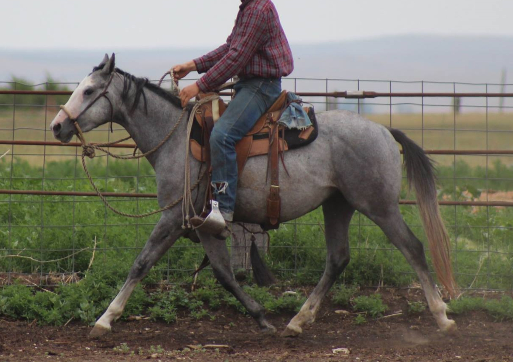 Dont Bug the Judge | Long Pines AQHA Prospect