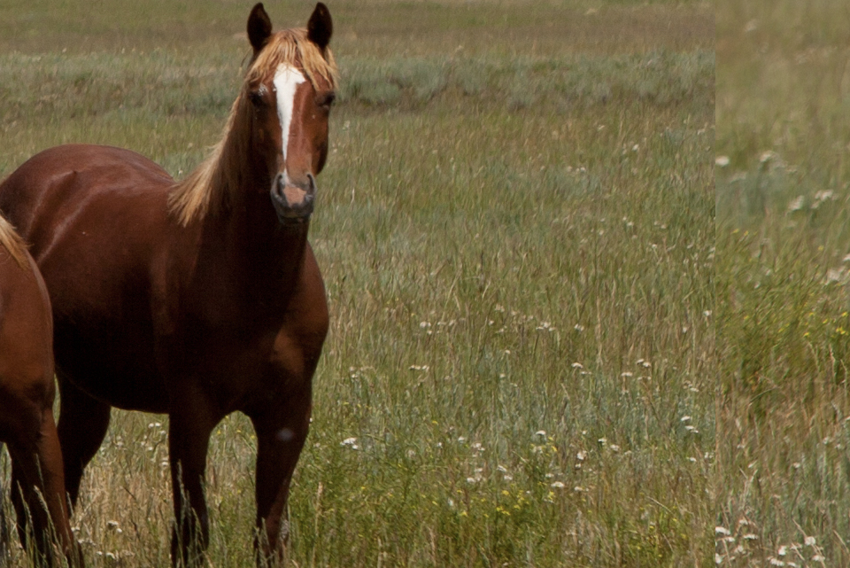 Betting Limits | Long Pines AQHA Prospect