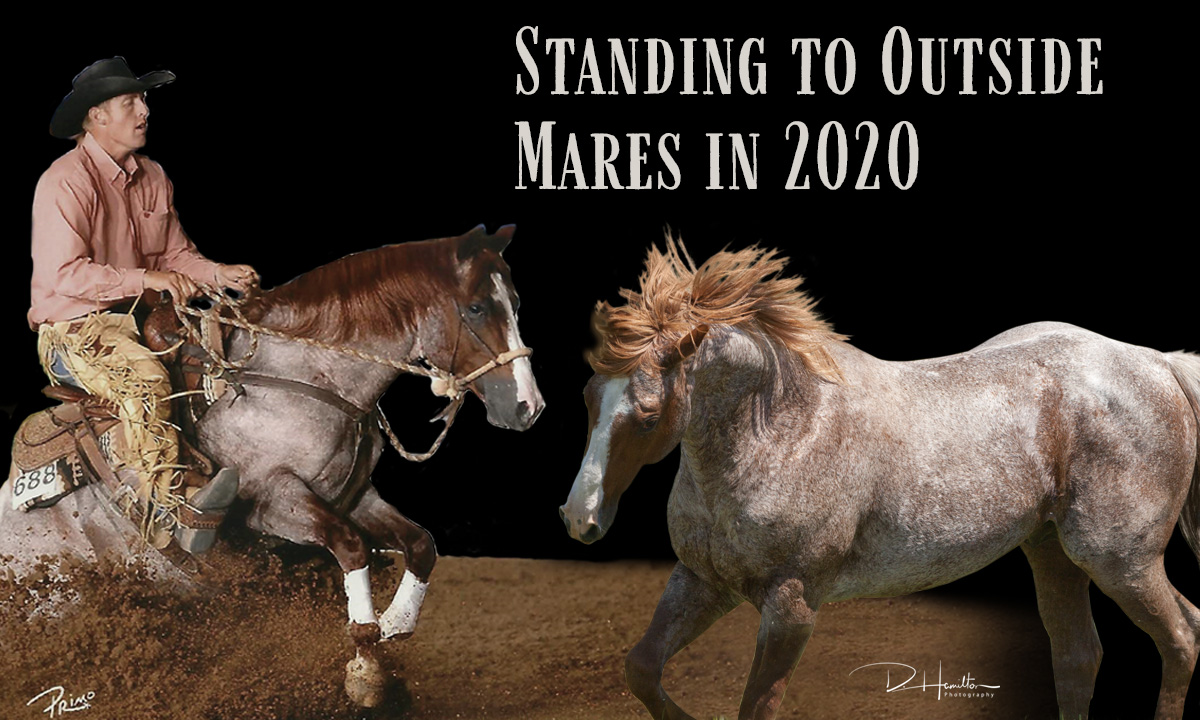Bettin Yer Smart Booking Outside Mares in 2020