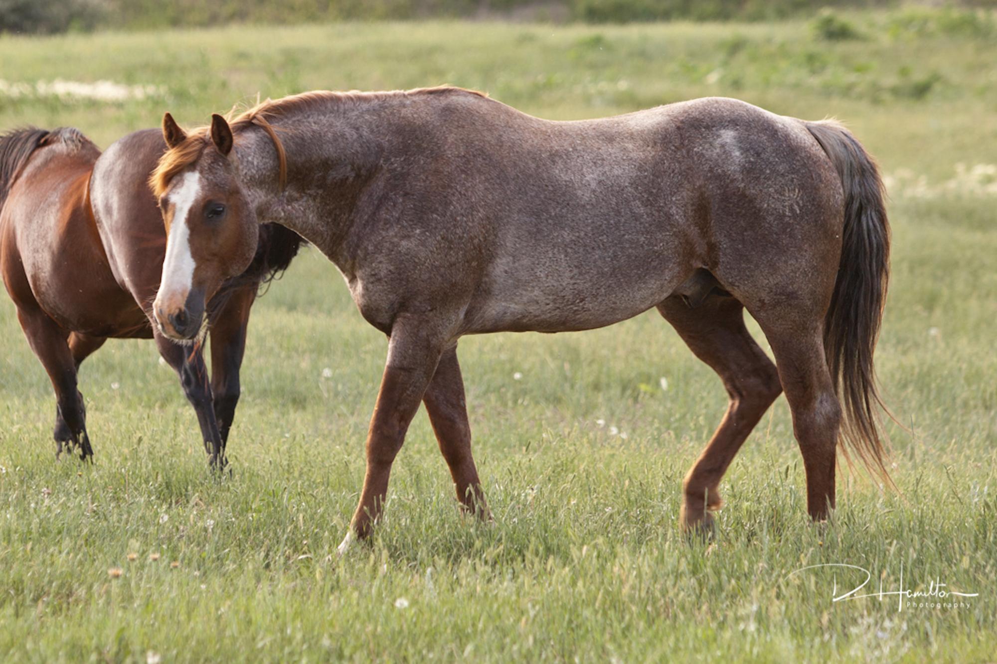 AQHA Stallion Bettin Yer Smart