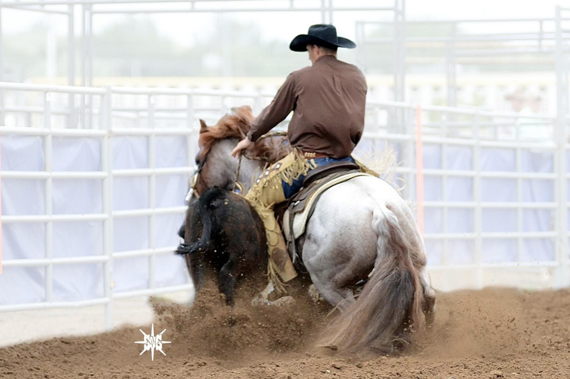 AQHA Stallion Bettin Yer Smart Fence Work