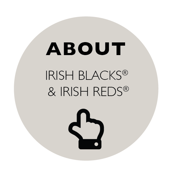 About Irish Black & Irish Red Cattle