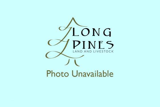 LP Photo Unavailable Blue