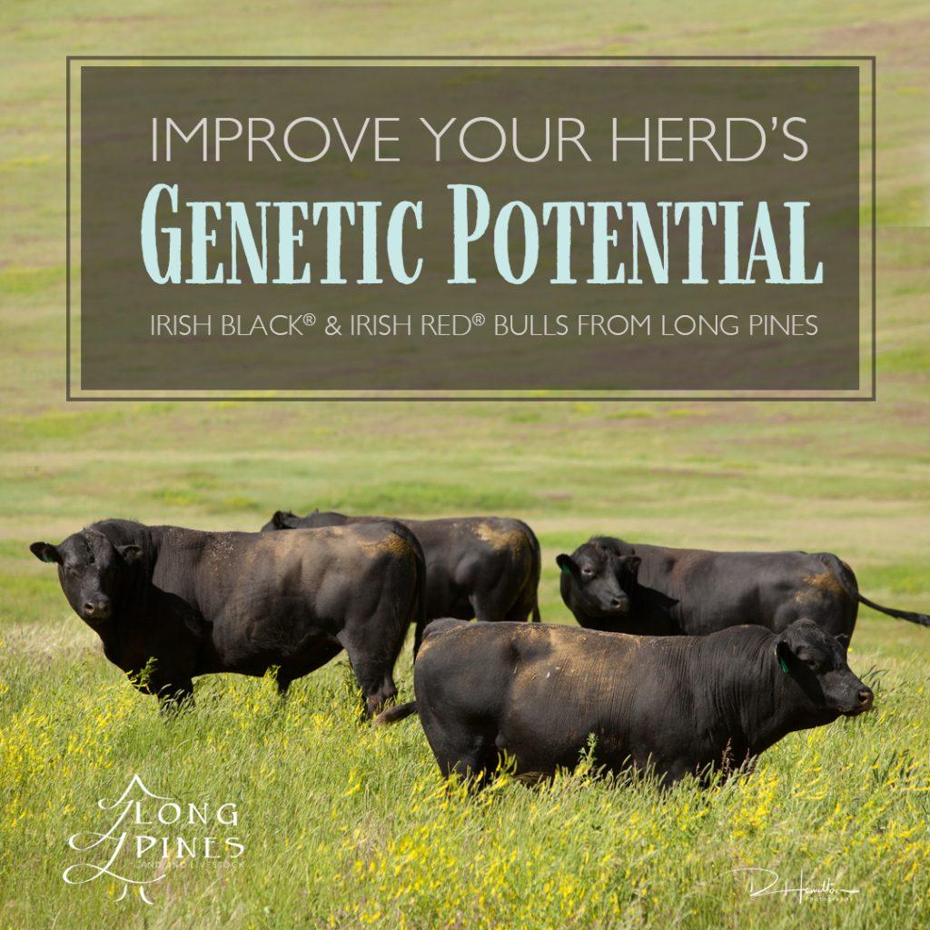 LP Genetic Potential