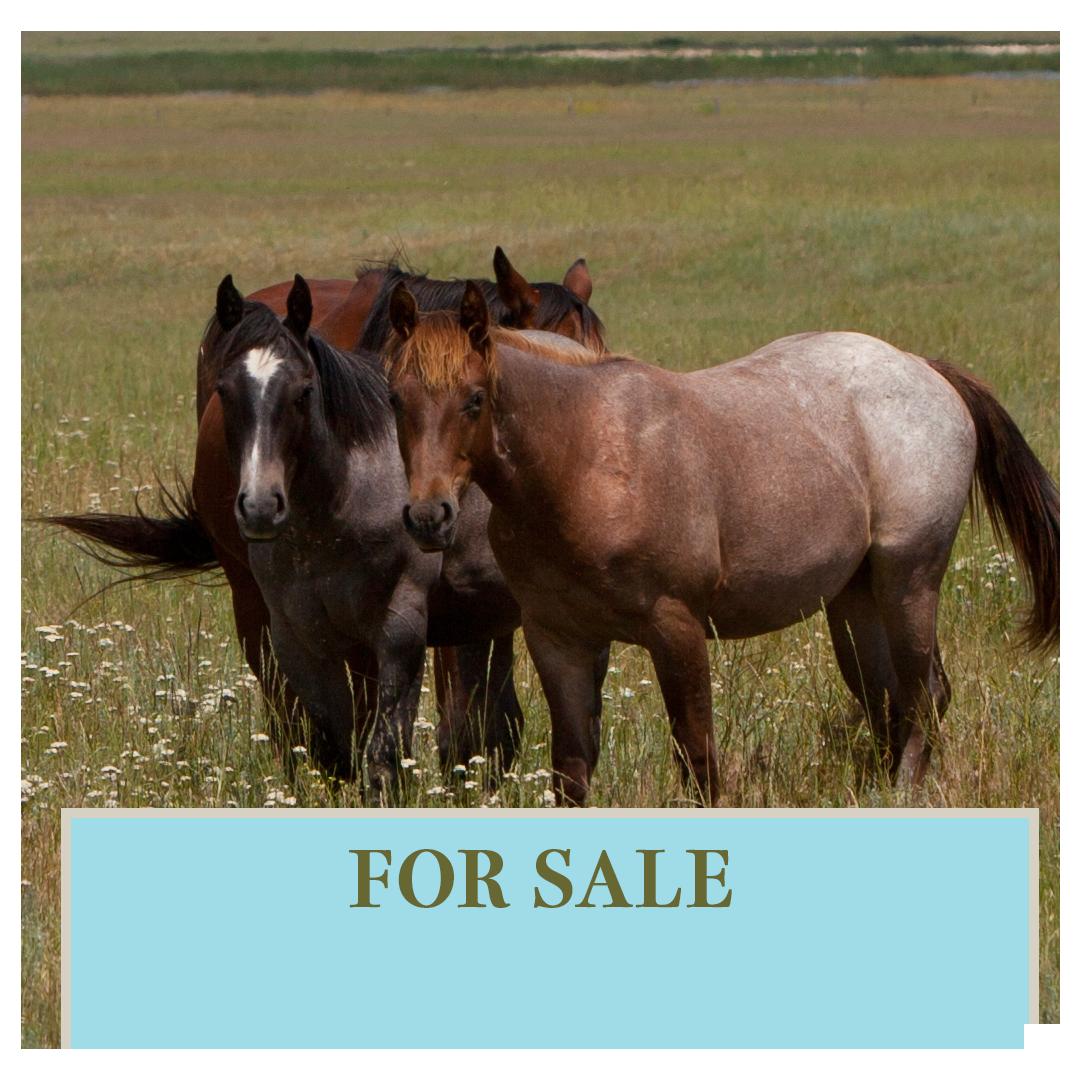 For Sale-v2