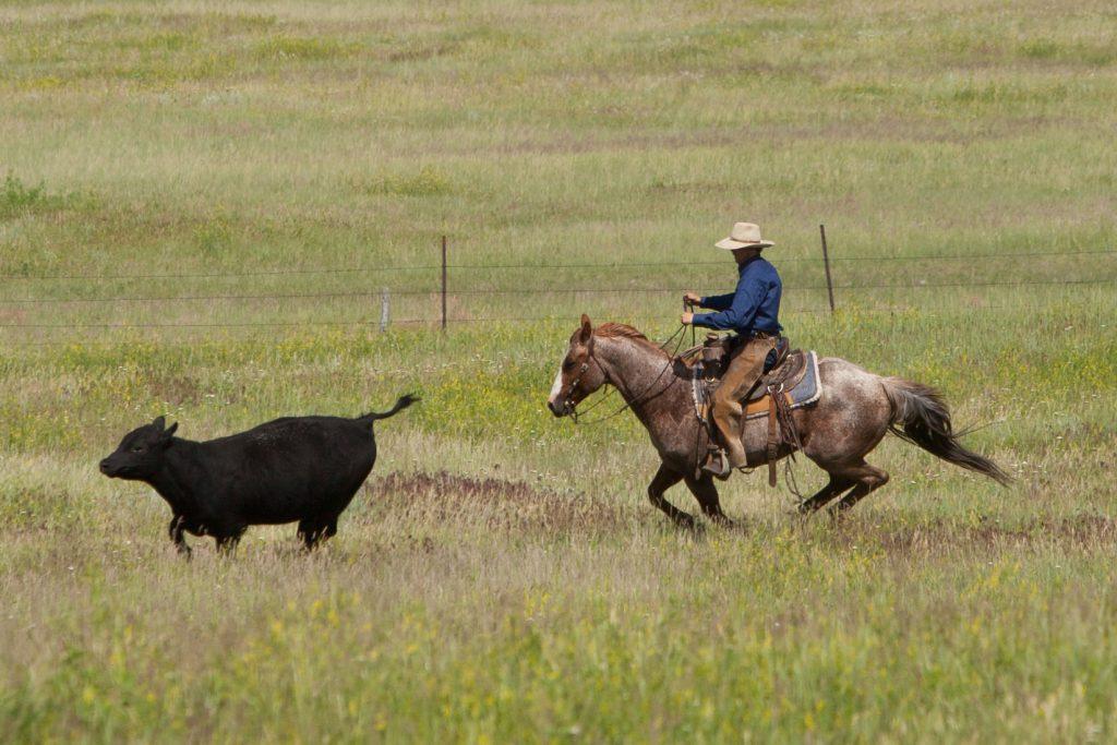 Bettin Yer Smart is at home both on the Long Pines range in northwest South Dakota