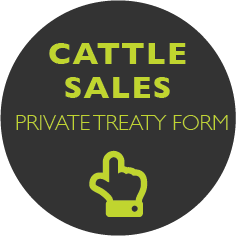 Cattle Sales Icon