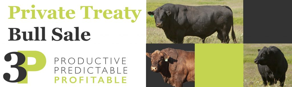 LP Bull Sale Website Graphic CLREV