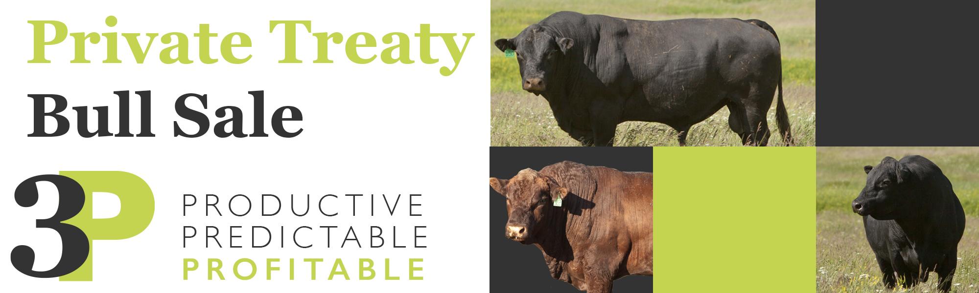 Private Treaty Bull Sale